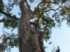 Tree. Sonya Duus