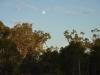 Moon over Euc. populnea. Sonya Duus
