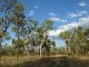 Mixed woodland. Sonya Duus