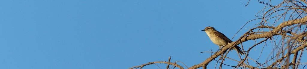 Qldgovtbird
