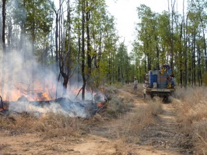 Fire is an important management tool at Bimblebox. There is the constant threat of uncontrolled fires coming onto the property during the summer months, which would be devastating for wildlife. Controlled burn time is August and September.