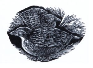 BMX 153 birds